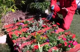 Comment faire un mur végétal en palette